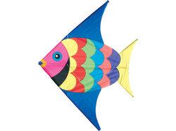 Drake Fisk